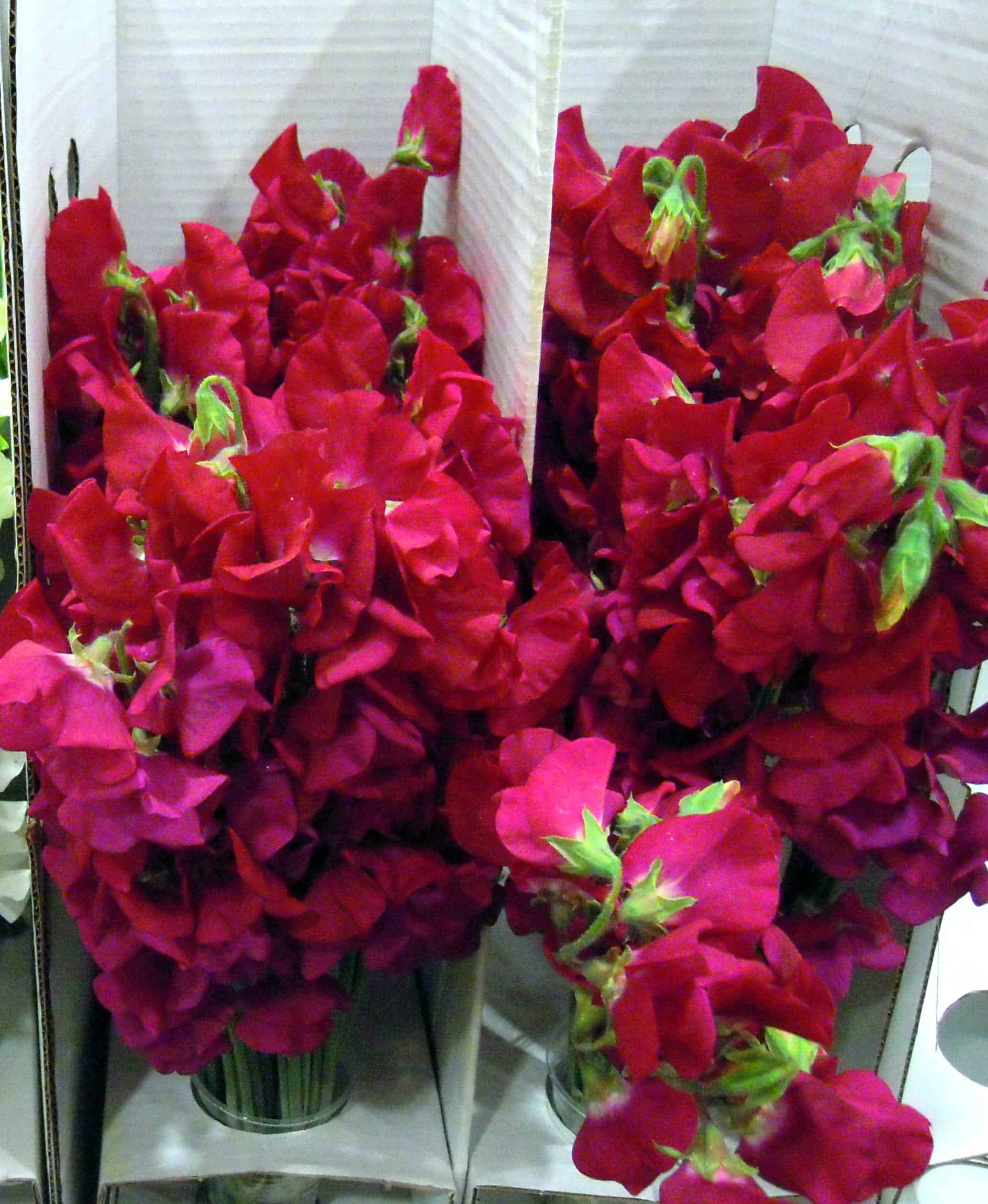 Sweet Peas The Perfect Wedding Bouquet Flower