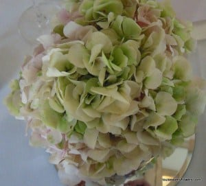soft pink and mottled pale green hydrangea. Variety name: vintage pink