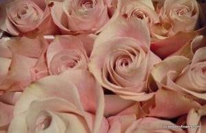 Romantic Wedding flowers. pink roses