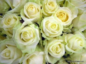 Romantic wedding flowers. white roses